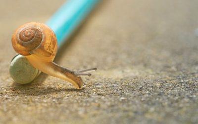 Slow writing: So oder so eine quälend gute Idee