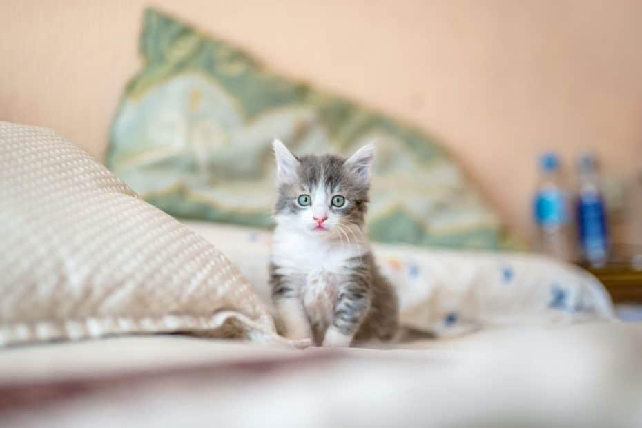 Es ist ja bekannt, dass Katzenbilder für eine längere Verweildauer sorgen. Oder etwa nicht?
